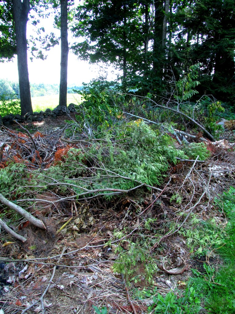 some of debris pile along woods path