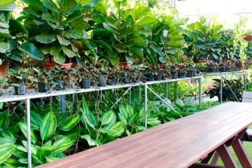 Plant Establishment Nursery