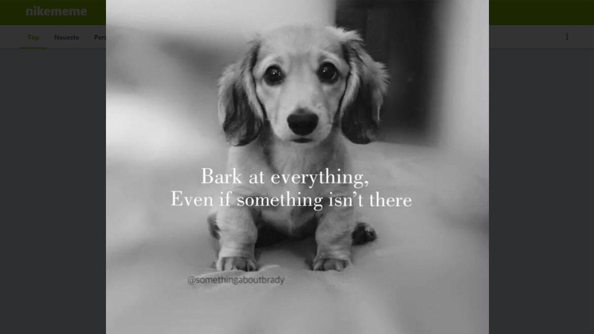 Hund Meme Professionelle Websites Erstellen
