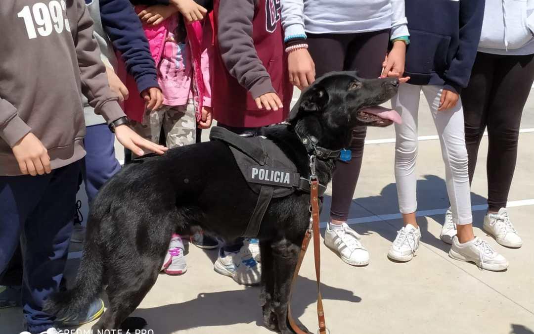 18 Mayo 19 Exhibición perros de la Policía de Illescas