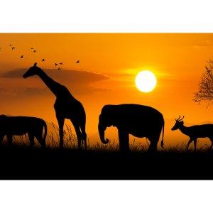 Silhouette d'animaux de la savane sur acrylique imprimée