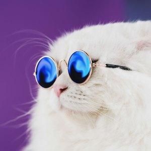Chat blanc avec lunette imprimé sur cadre d'acrylique