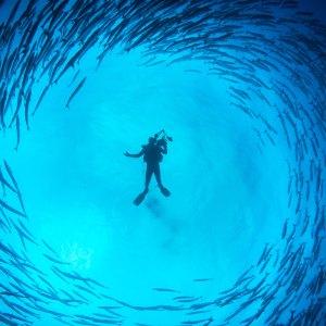Plongeur dans une tornade de barracuda sur murale imprimée sur vinyle autocollant
