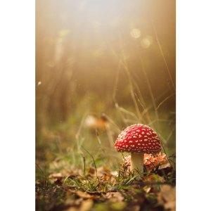 Photo d'un petit champignon dans la forêt sur acrylique imprimée