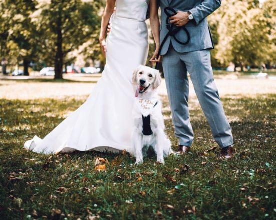 Personalize Your Wedding AMP DJ/BAND HYBRID