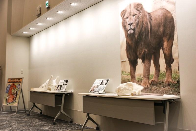 日本平動物園のライオン