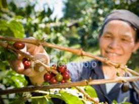 Fair Trade Farm