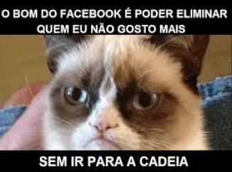 Memes engraçados de animais Gato do Facebook