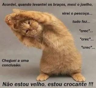 Memes engraçados de animais gato fazendo crec