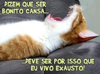 Memes engraçados de animais gato com muito sono