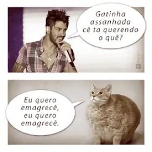 Memes engraçados de animais luan santana vs gato