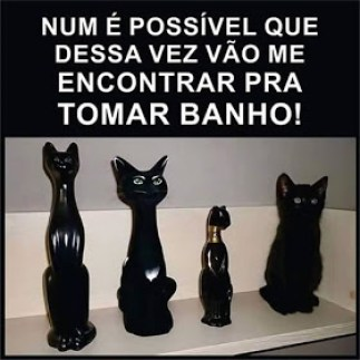 Gato estatua