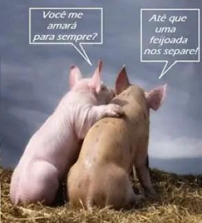 Memes engraçados de animais porcos