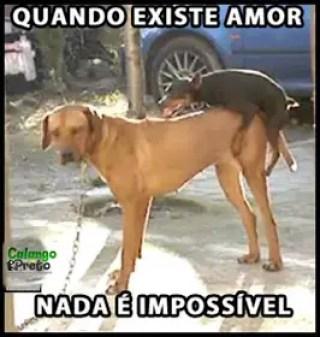 memes engraçados de animais amor de 2 cães