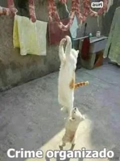 Memes engraçados de animais gato ladrão
