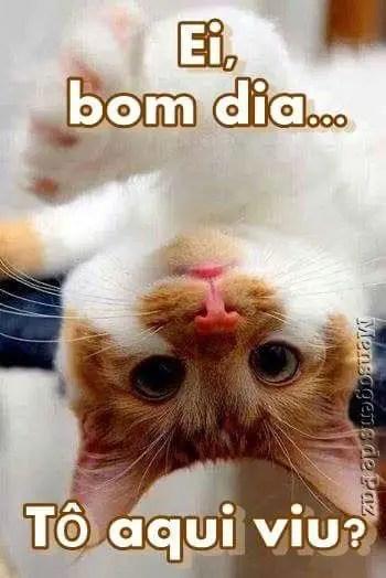 fotos de bom dia whatsapp o gatinho está de ponta cabeça