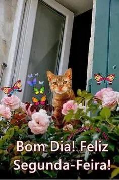 Bom dia com gato e flores