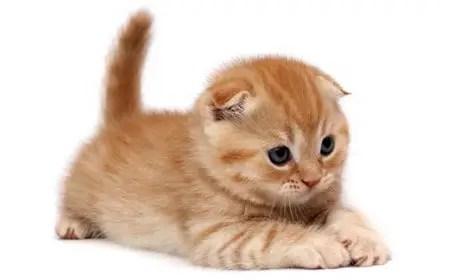 Gato amarelo e fofo