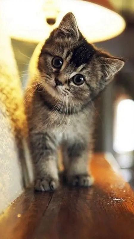 Filhote de gato fofinho