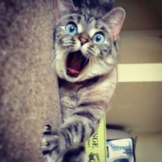 Gato surpreso