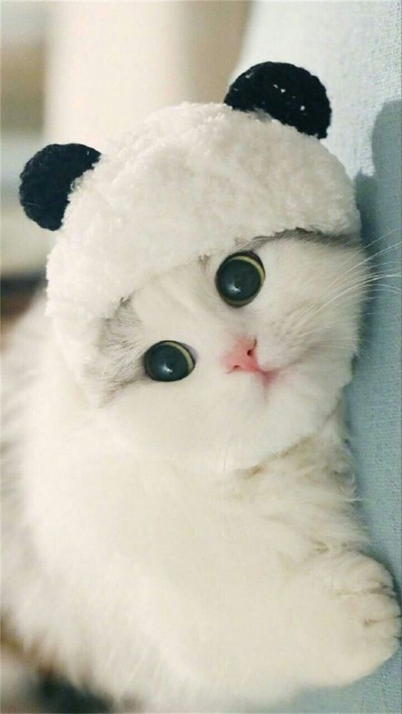 Gato com touca