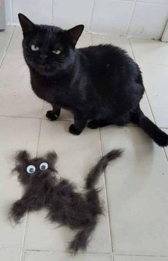 Gato preto e sua cópia de mentira