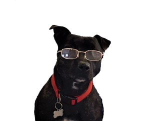 Rory - Office Dog - Amplitude Clinical Outcomes - amplitude-clinical.com