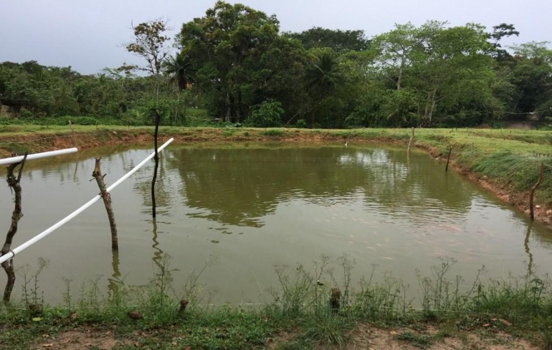 Proyecto Tilapias de Honduras