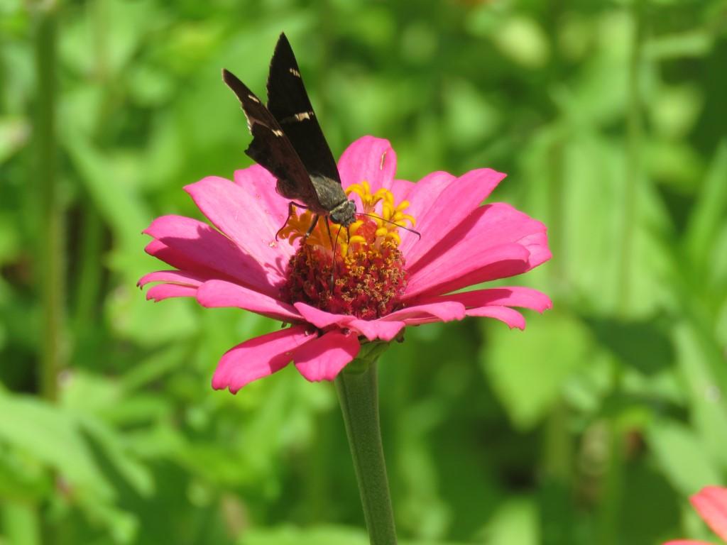 Simbiosis entre mariposa y flor clave para la regeneración natural de los ecosistemas en el municipio de Puerto Cortes.
