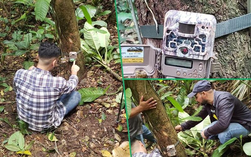 Instalamos 10 Cámaras trampa para identificar presencia de Fauna Silvestre.