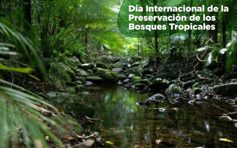 Día Internacional de la Preservación de los Bosques Tropicales.