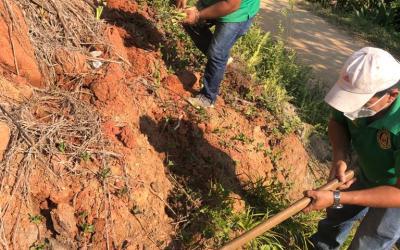Siembra de Vetiver para reforzar zonas de deslizamientos de la Cuenca del Río Tulián