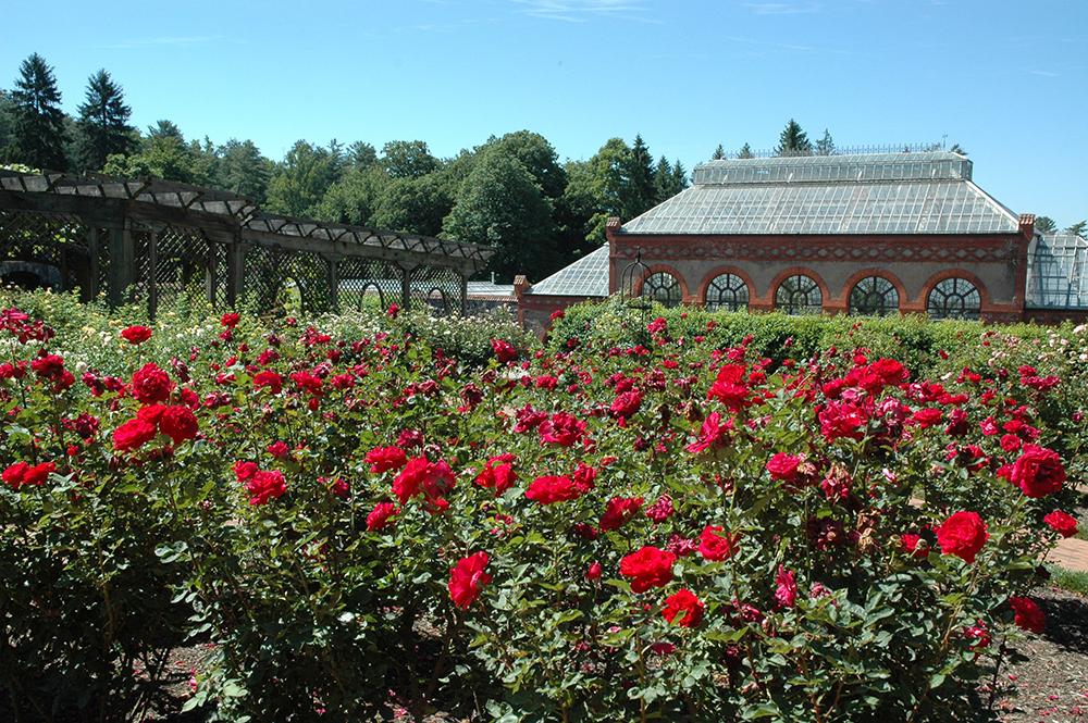 Biltmore Rose Garden
