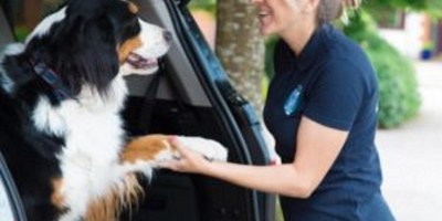 Dog getting a ride in a pet taxi from driver