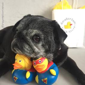 Doggy & Ducky heroes
