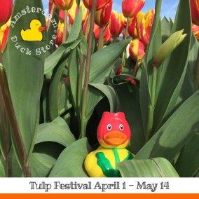 Enjoying 500.000 beautiful tulips on 60 locations in Amsterdam. It's Tulp Festival!