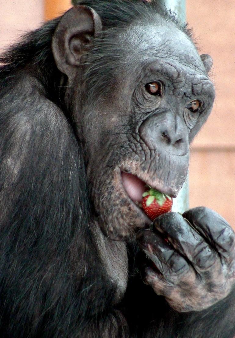 going ape in almere amsterdam oriole