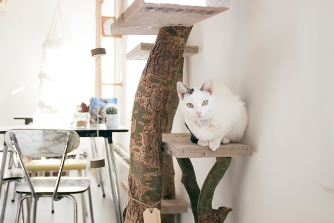 a cat on a ledge at Kopjes Cat Cafe Amsterdam