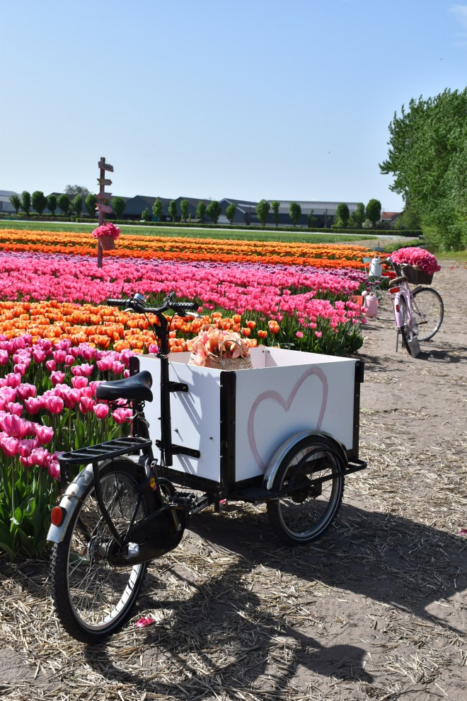 FAM Flower Farm with bikes and tulips, just outside Amsterdam