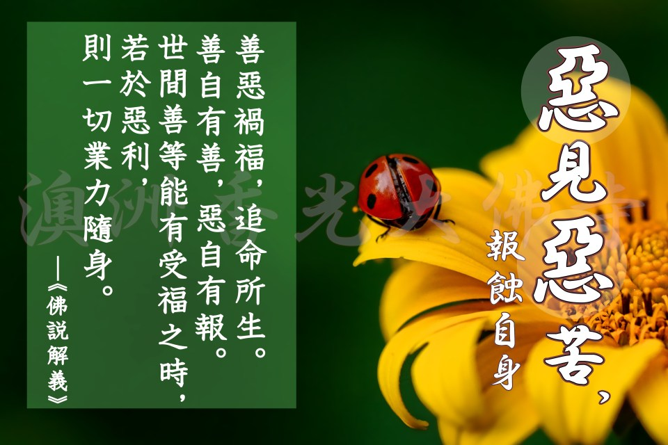 ladybug-3475779