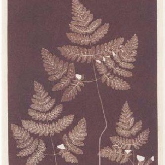 Leaf Prints. Early Cameraless Photography and Botany/Отпечатки листьев. Ботаника и бескамерная фотография, Katharina Steidl, Photoresearcher #17, 2012