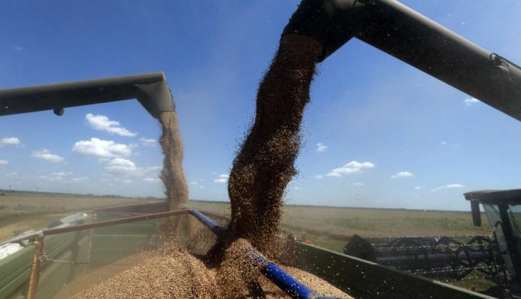 صناعة الحبوب - شراء القمح