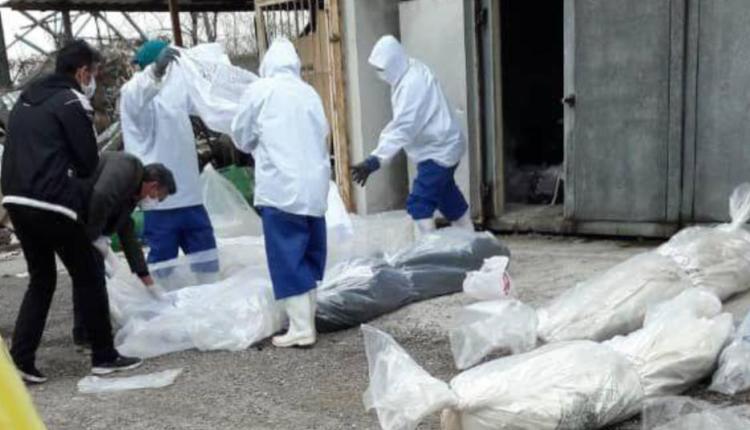 ضحايا فيروس كورونا