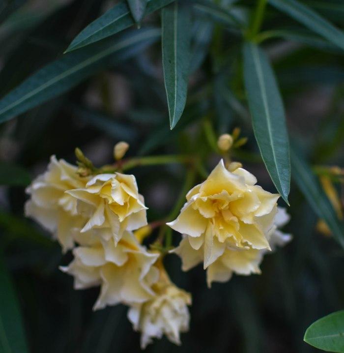 2017-06-08-Day-3-Artemis-flower7