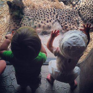 Cute kitties and even cuter babies.