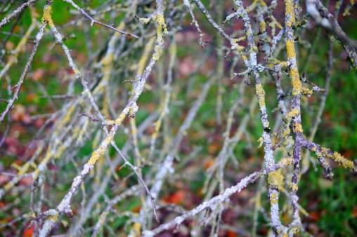 cardiff-autumn-amy-davies-005