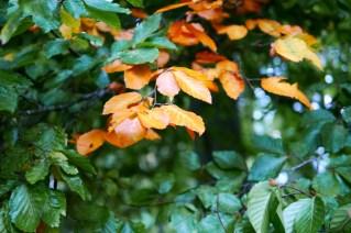 cardiff-autumn-amy-davies-006