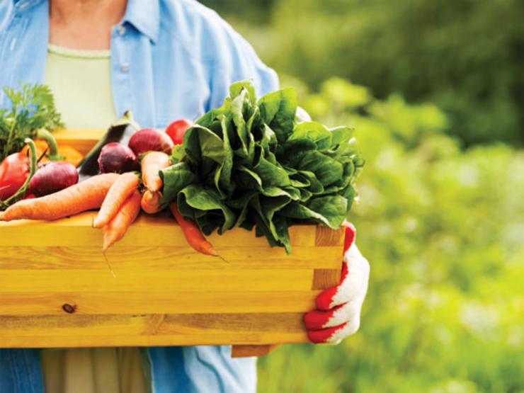 5-organic-gardening-food-TS-168345034