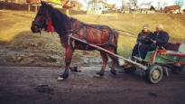 boiu horse and buggy