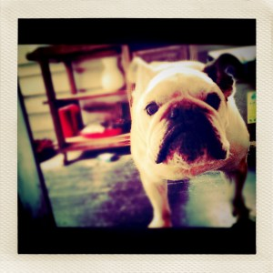 max with instagram and layered in LoMob